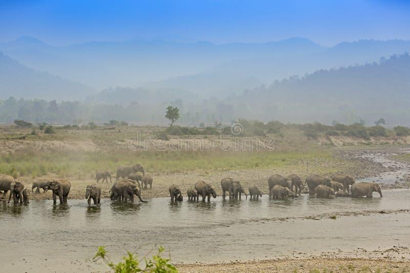 Ouviu os elefantes asiáticos que reunem-se pelo rio imagem de stock royalty free