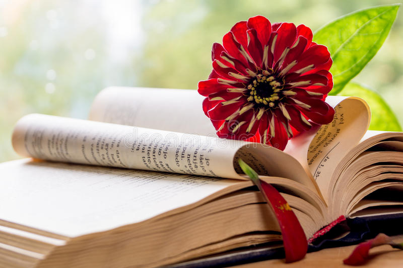 45 Ouvrez La Bible Et La Fleur Photos libres de droits et ...