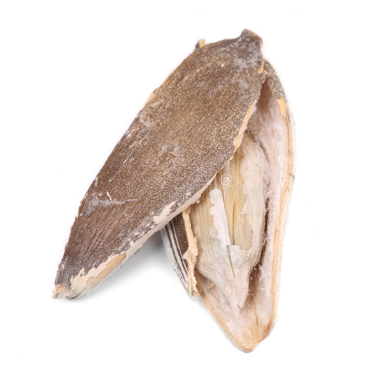 Ouvrez la graine de tournesol. photographie stock libre de droits