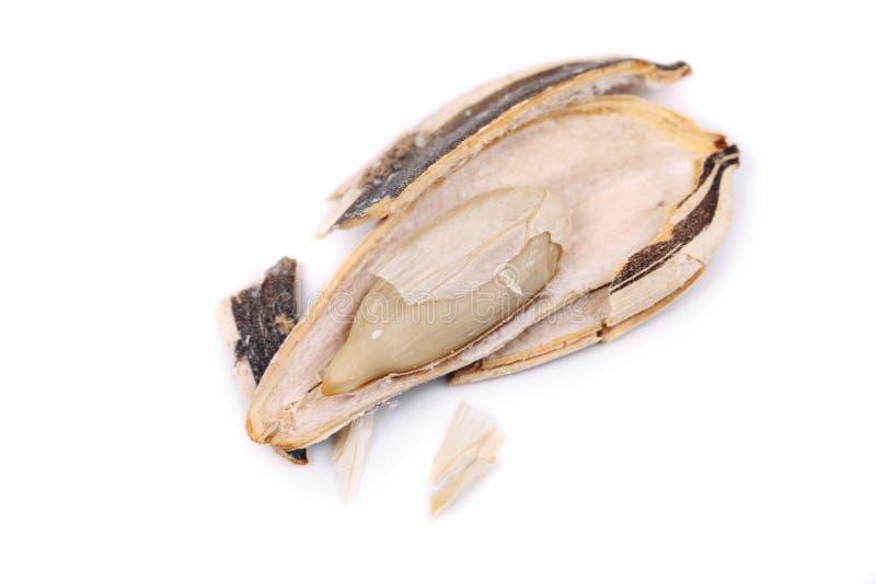 Ouvrez la graine de tournesol. image libre de droits