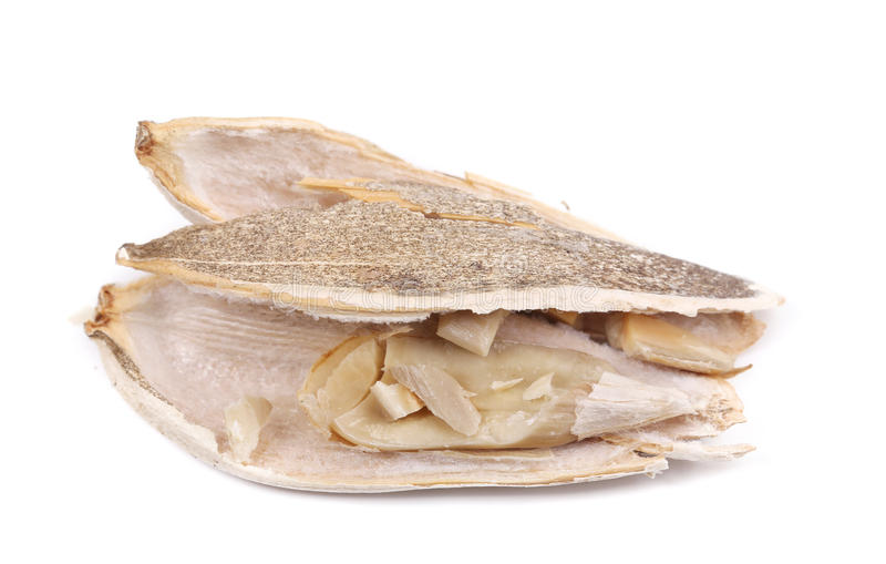 Ouvrez la graine de tournesol. image stock