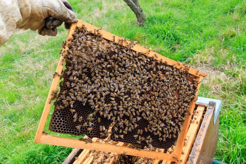 Ouvrez la ruche, l'apiculture image stock
