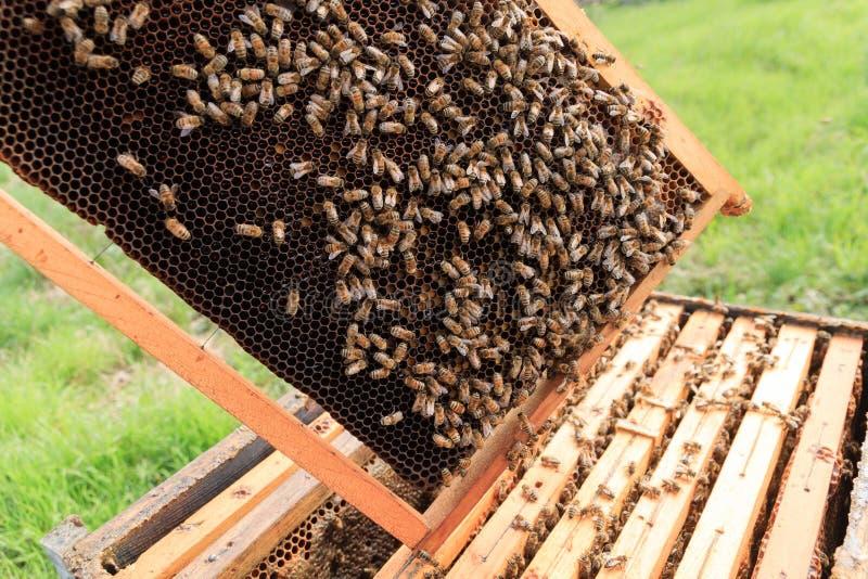 Ouvrez la ruche, l'apiculture image libre de droits