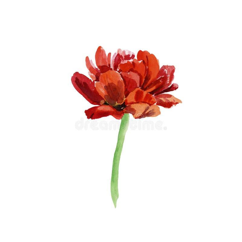 Ouvrez la tulipe illustration libre de droits
