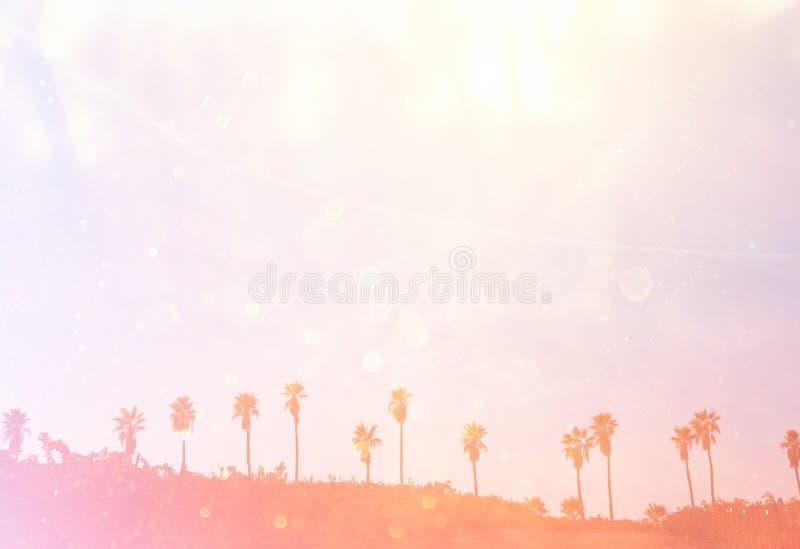 Ouvrez la vue des palmiers rétro image filtrée photo stock