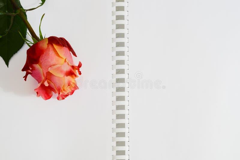 Ouvrez le carnet avec les bonnes feuilles blanches et rouge, rose, rose de jaune image libre de droits