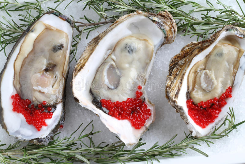 Ouvrez les huîtres sur le fond glacial image libre de droits