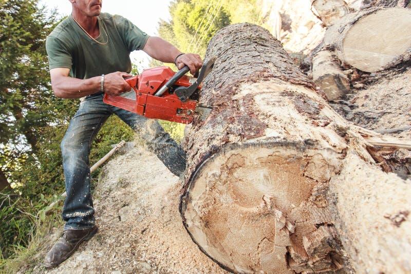 Ouvrier avec une tronçonneuse qui coupe un arbre image libre de droits