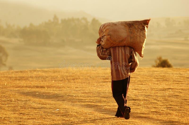 Ouvrier de ferme au Pérou photo libre de droits