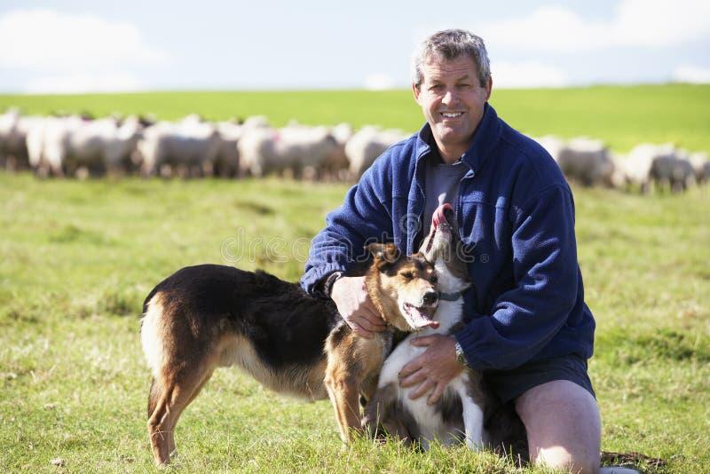 Ouvrier de ferme avec la bande de moutons image libre de droits