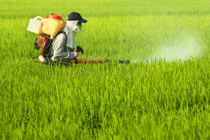 ouvrier de riz de zone photo libre de droits
