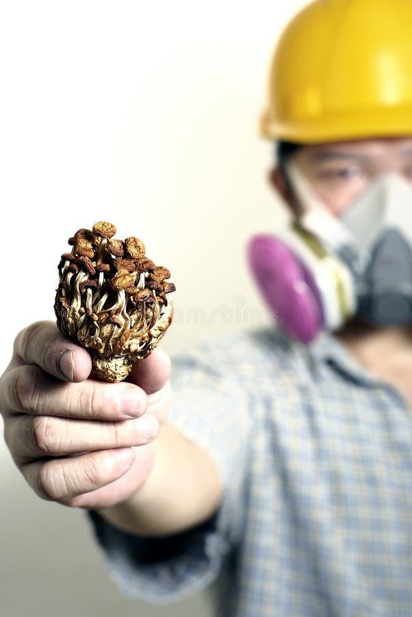 Ouvrier retenant le champignon de couche toxique image libre de droits