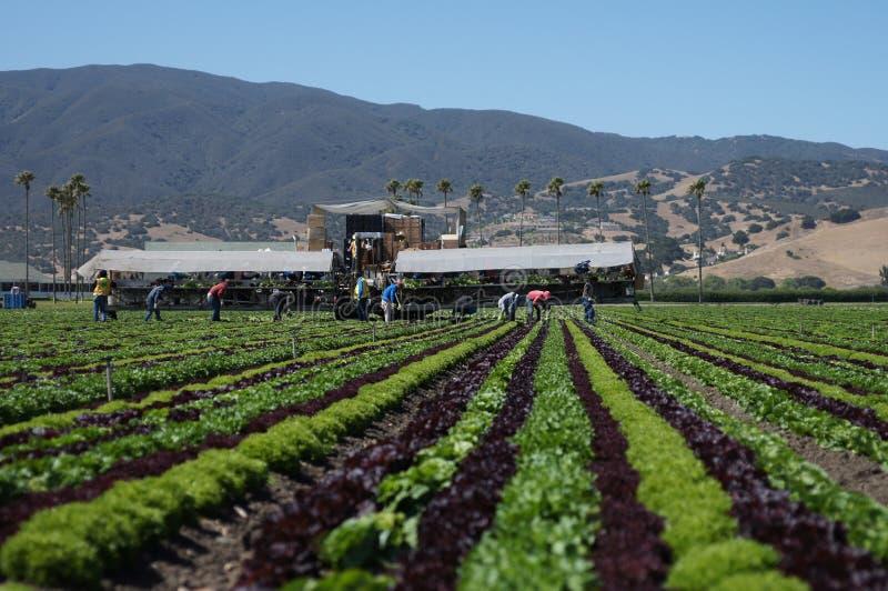 Ouvriers migrateurs de ferme photo libre de droits