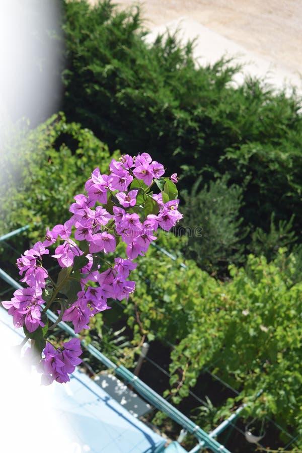 Oväntat blommafynd under en tur arkivbild
