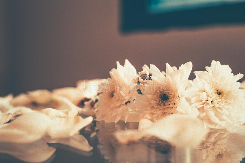 Oväsen och korntappningsignal blomman och reflexionen på tabellexponeringsglas royaltyfri foto