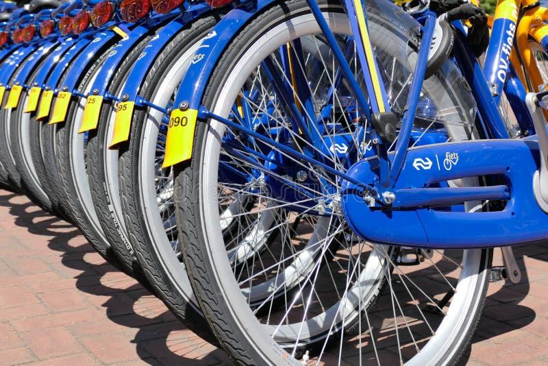 OV czynsz jechać na rowerze od Holenderskich kolei zdjęcie royalty free