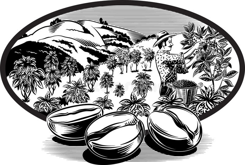 Oval frame, with coffee beans. And coffee bin man on a plantation stock illustration