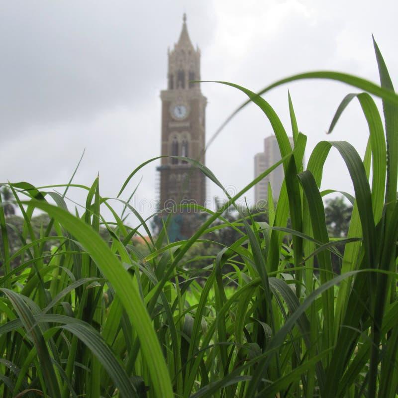Oval Ground Mumbai stock photo