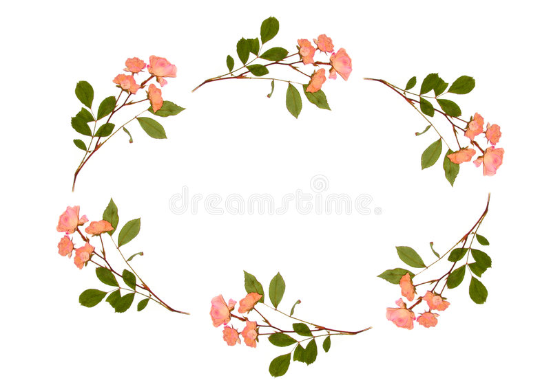 Download Oval Of Roses Royalty Free Stock Images - Image: 1713999