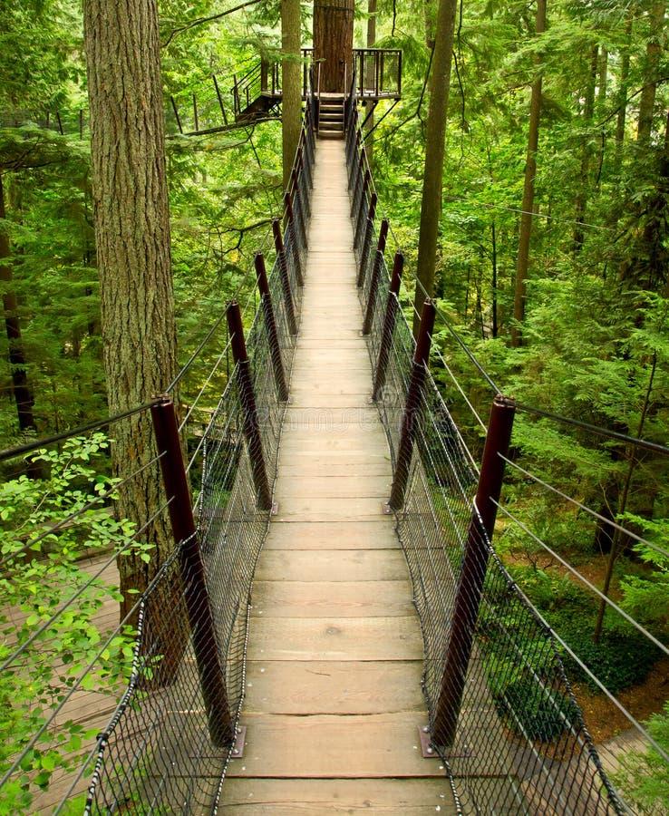 ovanför broskog royaltyfri fotografi