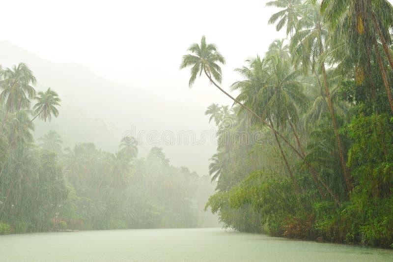 ovanför den tropiska regnfloden arkivfoto