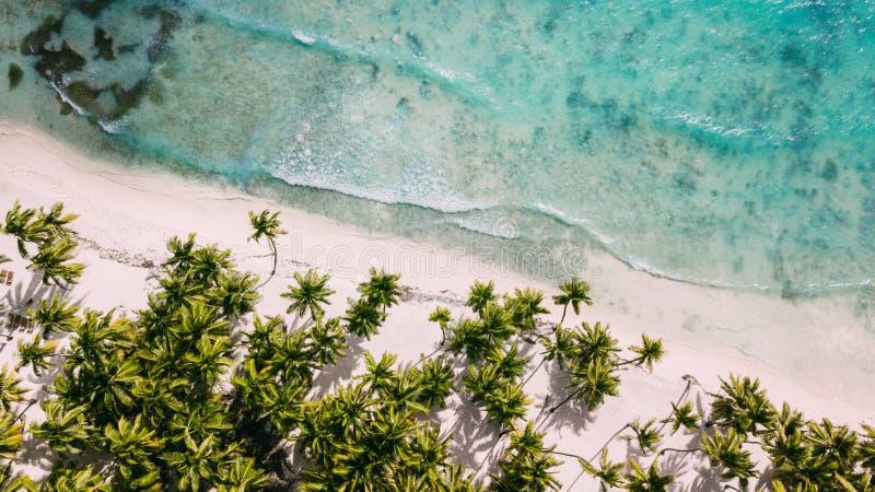 Ovanför den vita stranden Palmträd och vatten royaltyfria foton