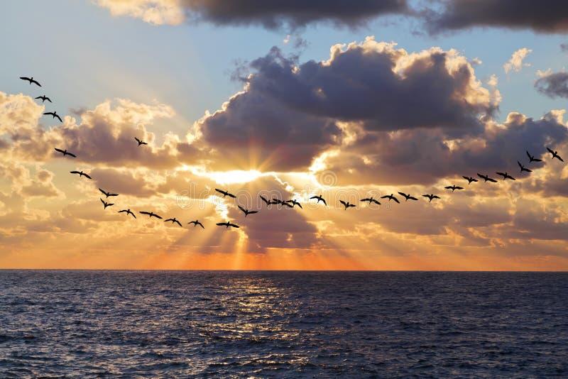 ovanför härlig havssolnedgång arkivbild