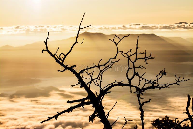 2195 ovanför område som doi för område för distorsion för chiangkottedao high highest har high highest inverterat level djurliv f arkivfoto