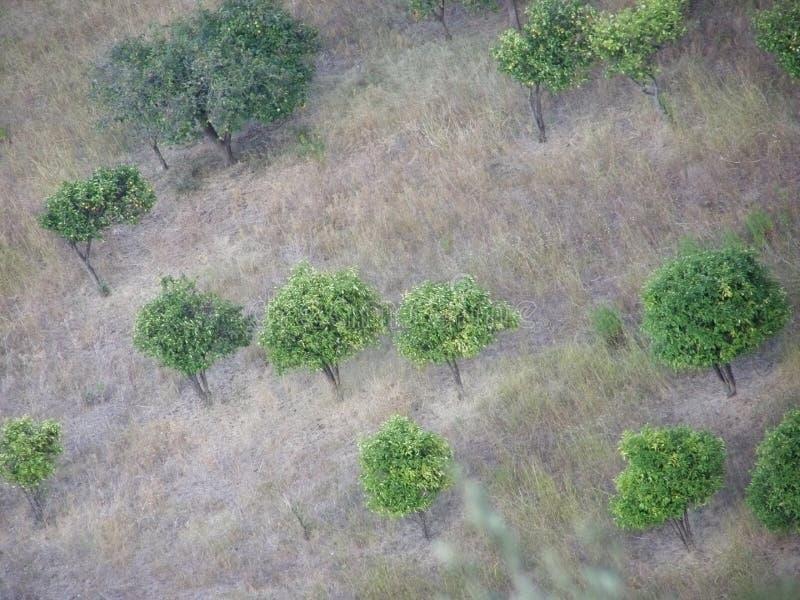 ovanför trees royaltyfria bilder