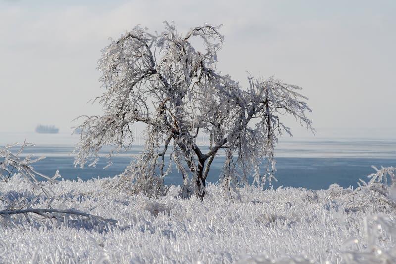 Ovanlig anomali av det djupfrysta trädet och gräs royaltyfri foto
