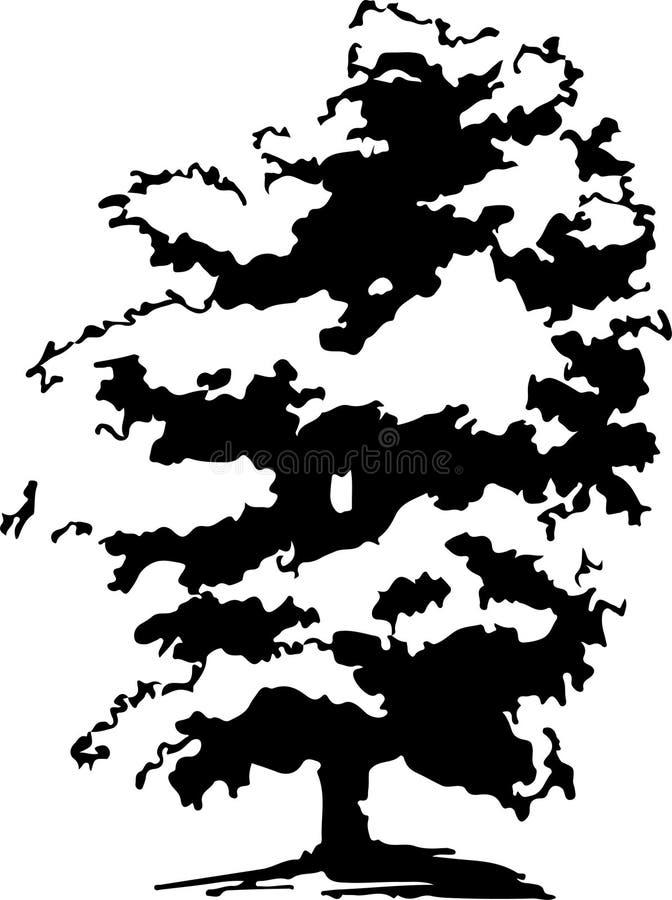 Ovanlig ebenholts med unika filialer och härlig lövverk royaltyfri illustrationer