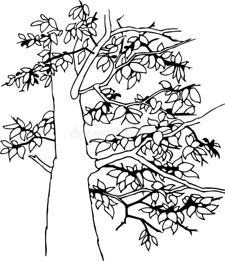 Ovanlig ebenholts med unika filialer och härlig lövverk stock illustrationer