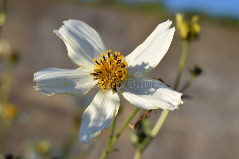 Ovanlig vit blomma arkivbild