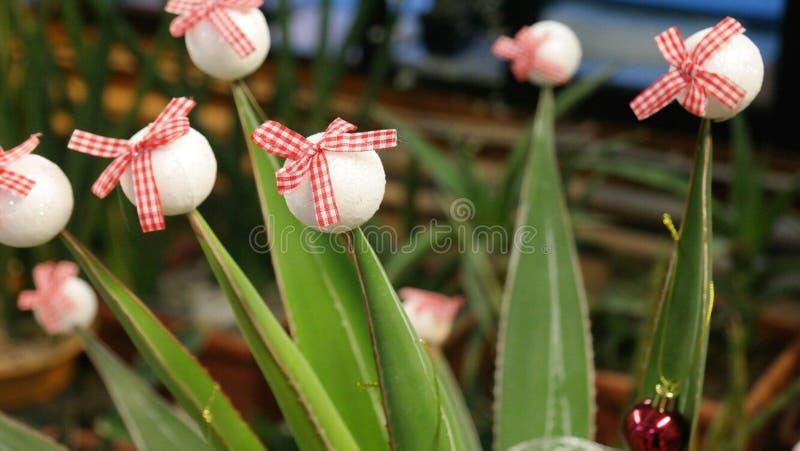 Ovanliga växter Dekorering av växter royaltyfri bild