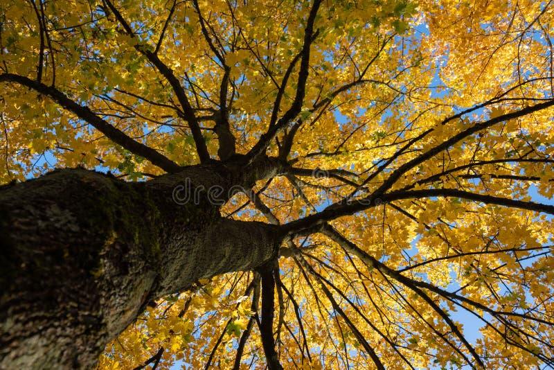 Ovanligt format träd i höst arkivbild