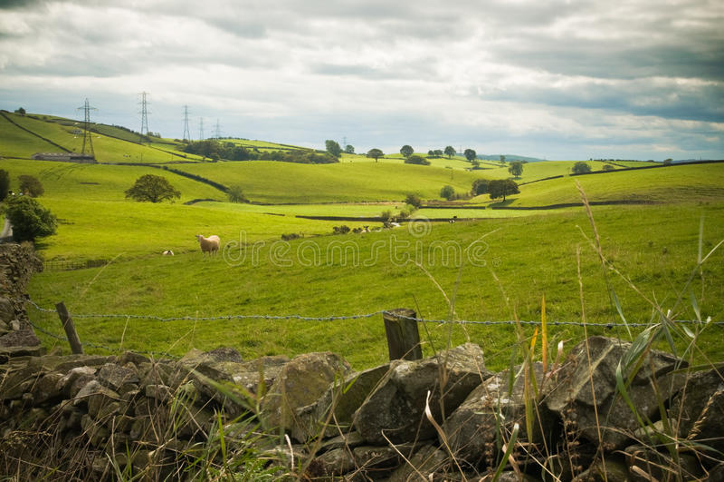 Ovejas en Cumbria foto de archivo
