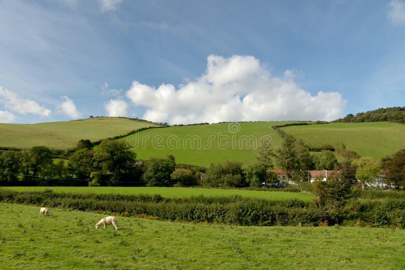 Ovejas en el campo, valle de Doone, Exmoor, Devon del norte fotos de archivo libres de regalías