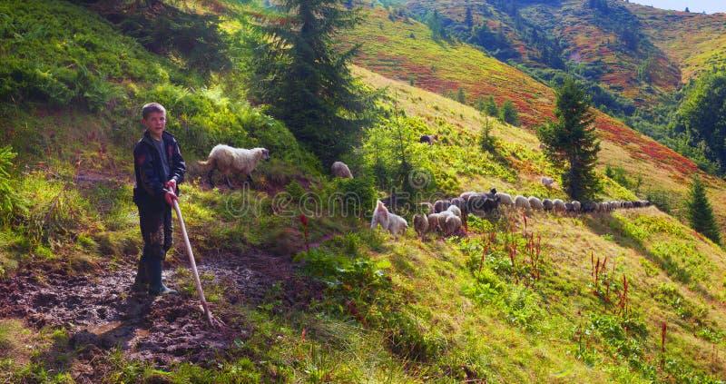Ovejas en un pasto de la montaña fotografía de archivo