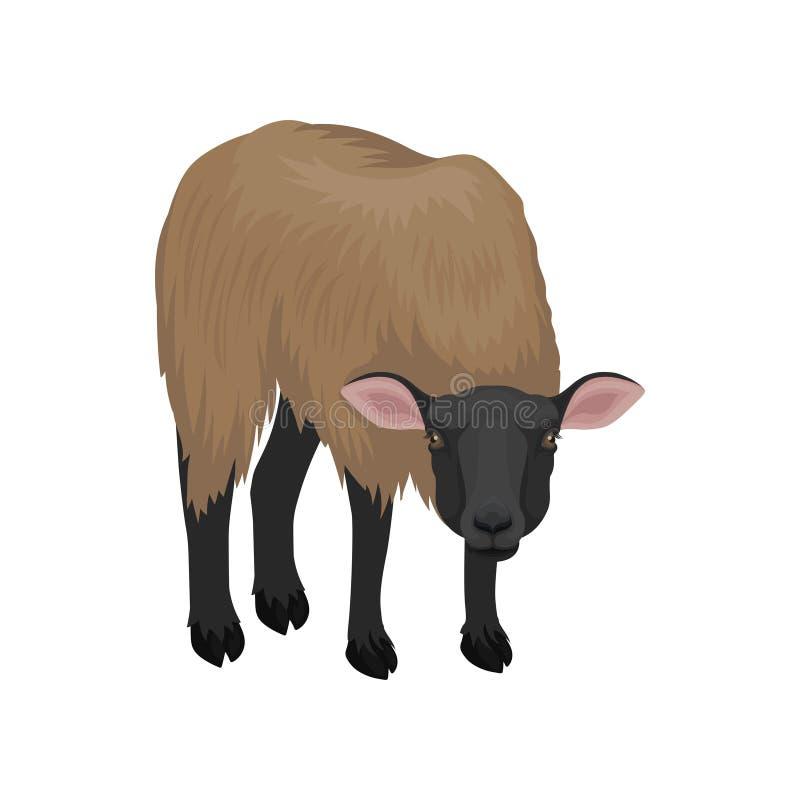 Ovejas jovenes de Suffolk Animal del campo con lanas marrones gruesas Criatura nacional Tema del cultivo de ganado Icono plano de ilustración del vector