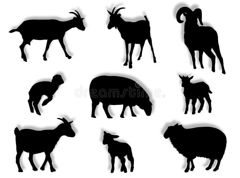 Ovejas y cabras en silueta ilustración del vector