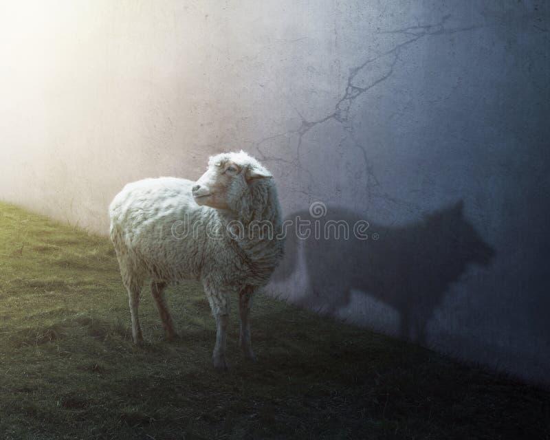 Ovejas y lobo imagenes de archivo