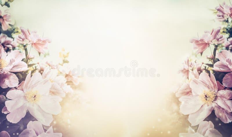 Ovely花卉淡色背景,横幅 皇族释放例证