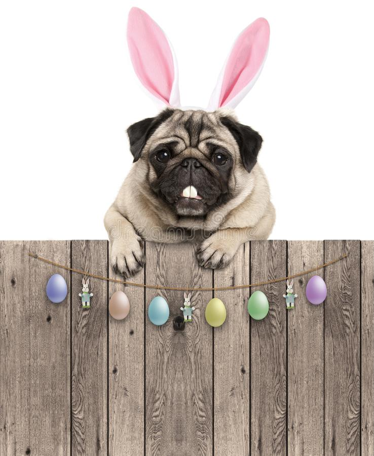Ovely pug dog with easter bunny ears diadem, hanging with paws on wooden fence with egg decoration,. Lovely pug dog with easter bunny ears diadem, hanging with stock photography
