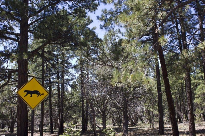 Over de Nationale Park_Panther waarschuwing van Yosemite royalty-vrije stock foto