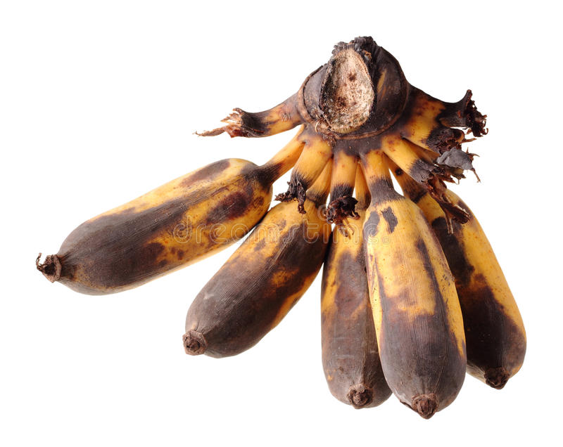 Over ripe cultivated banana royalty free stock images
