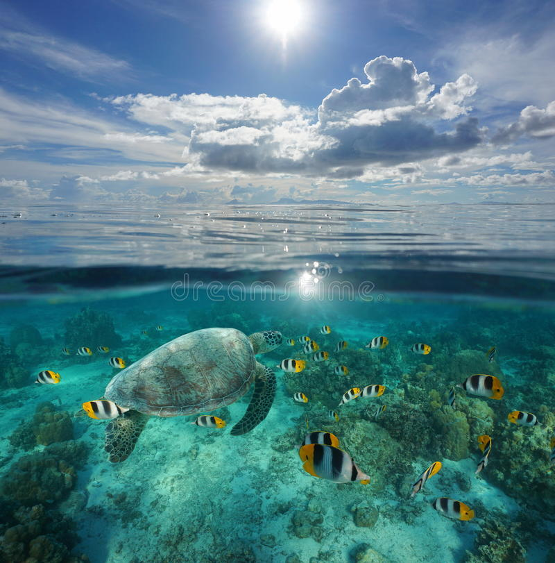 Over under sea tropical fish with turtle Pacific. Over and under sea surface, tropical fish with a turtle underwater and an island at the horizon with cloudy royalty free stock photos