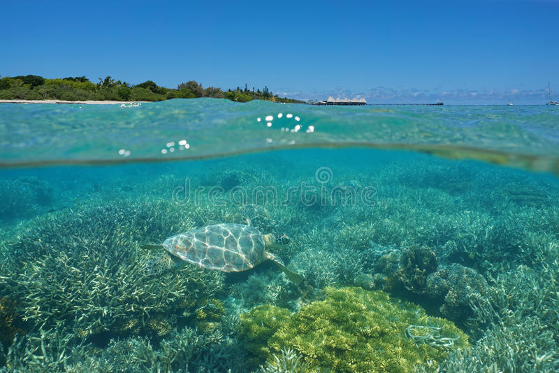 Over under sea turtle and island with resort stock images