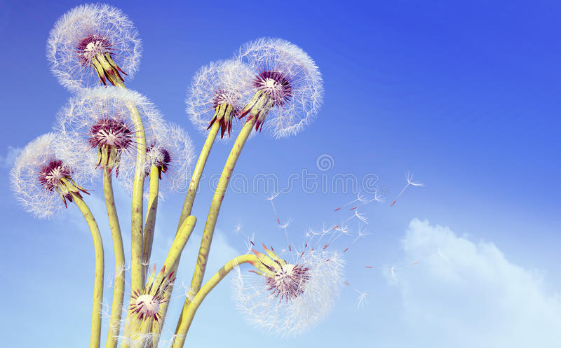 Overblown dandelion with seeds flying away with the wind. Overblown dandelion with seeds flying away with the wind against the background of the sky royalty free stock photos
