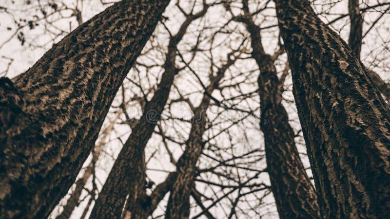 Деревья против небес Overcast Бесплатное  из Общественного Достояния Cc0 Изображение