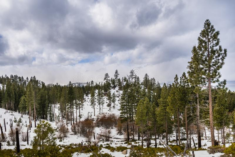 Overcast day in Van Sickle Bi-State Park; south Lake Tahoe, California stock photo